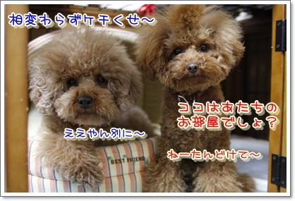 5_20100224185226.jpg