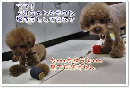 5_20100405221724.jpg
