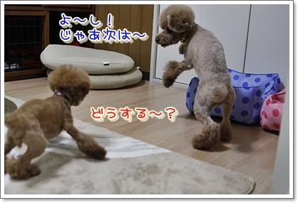 5_20100427011209.jpg