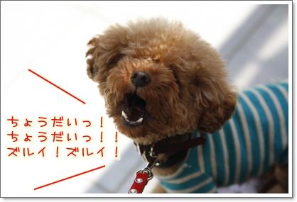 5_20100501233141.jpg