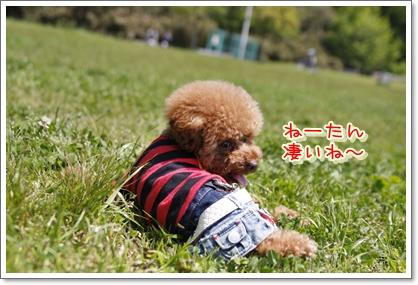 5_20100503204626.jpg