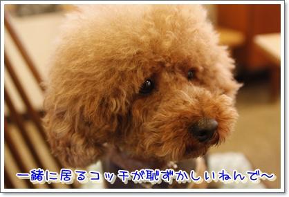 5_20100617002759.jpg
