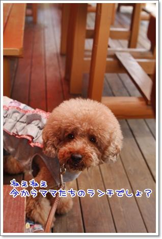 5_20100711164210.jpg