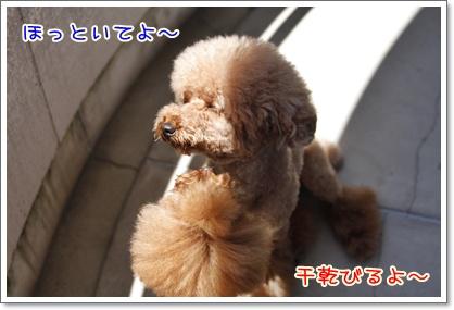 5_20100719220710.jpg