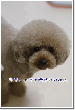 5_20100720192808.jpg