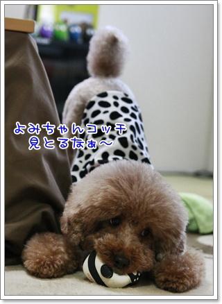 5_20110117190721.jpg