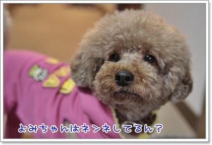 5_20110305215452.jpg