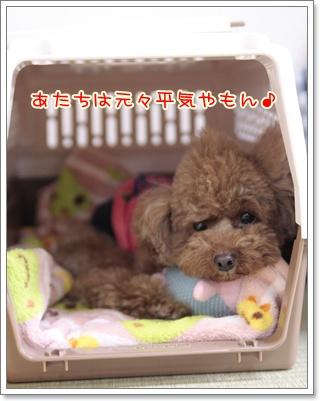 5_20110320112948.jpg