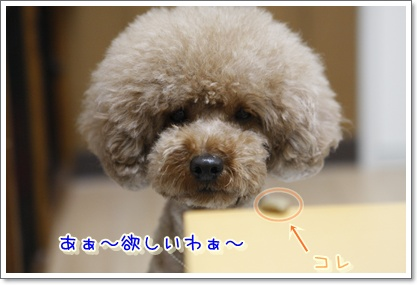 6_20100304190223.jpg
