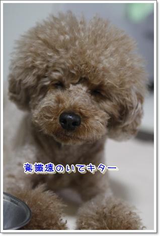 6_20100311001346.jpg