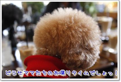 6_20100316195058.jpg