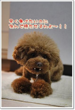 6_20100319231303.jpg