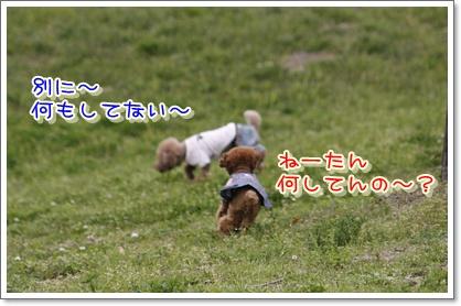 6_20100420191217.jpg
