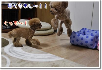 6_20100427011208.jpg