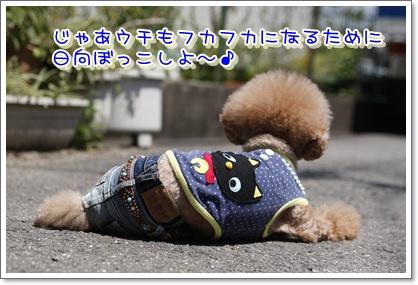 6_20100506005330.jpg