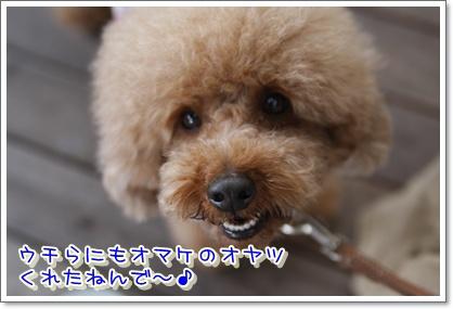 6_20100523143156.jpg
