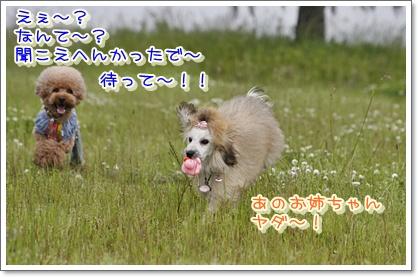 6_20100524011944.jpg