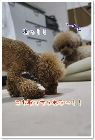 6_20100530003356.jpg