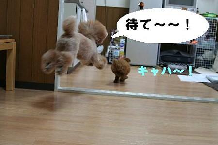 6_20100705202804.jpg