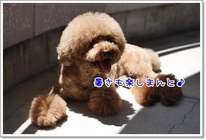 6_20100719220704.jpg