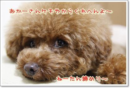 7_20100304191121.jpg