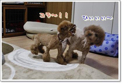 7_20100427011959.jpg