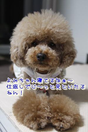 7_20100613002230.jpg
