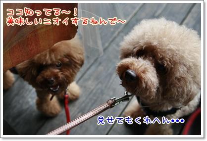 7_20100816232943.jpg