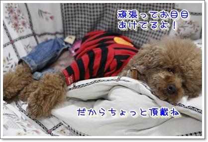 8_20100418225754.jpg