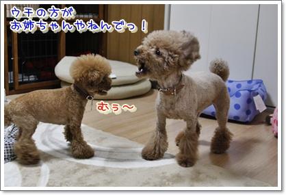 8_20100427011959.jpg
