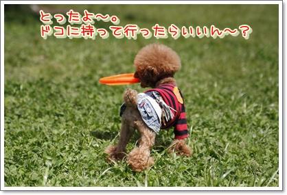 8_20100503205508.jpg
