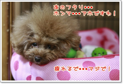 8_20100912001711.jpg