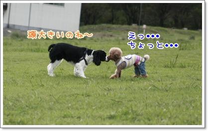 8_20100928183438.jpg