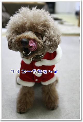 8_20101225001441.jpg