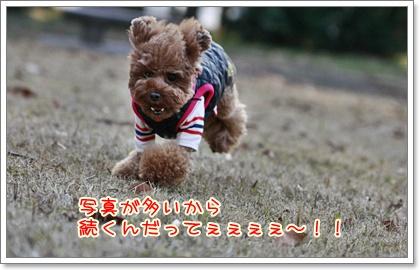 8_20110110224637.jpg