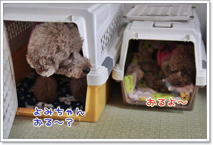 8_20110320115000.jpg