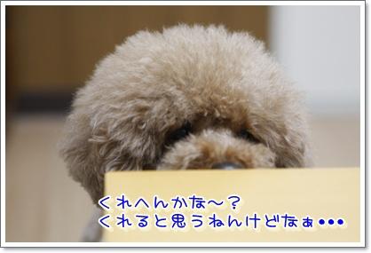 9_20100304191121.jpg