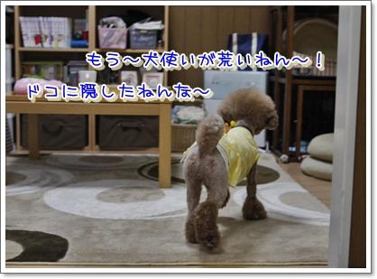 9_20100601005420.jpg