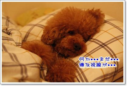 9_20100611003221.jpg