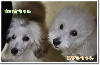 9_20100628002636.jpg