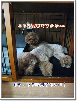 9_20100713003752.jpg