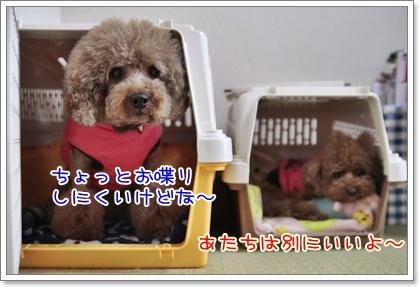 9_20110320115000.jpg