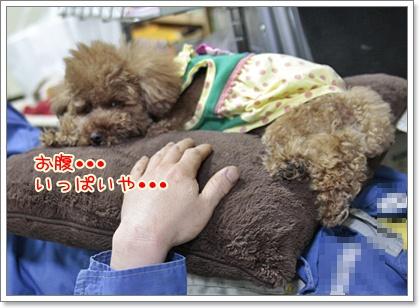9_20110514110830.jpg