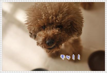 d_20100129222232.jpg