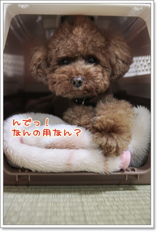 e_20110424232534.jpg