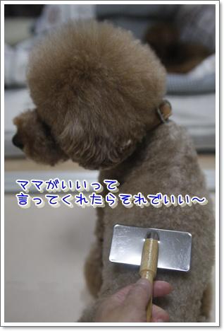 g_20100125215509.jpg