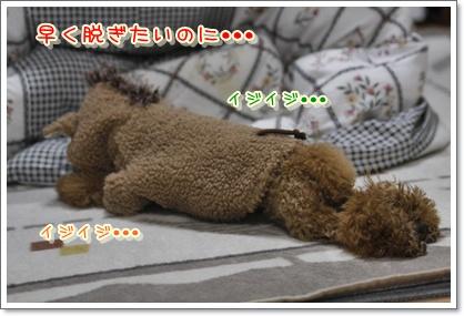 h_20100126222720.jpg