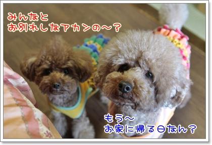 n_20110417141249.jpg