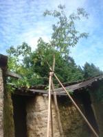木アート2