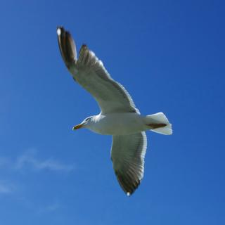 20060320_seagull1.jpg